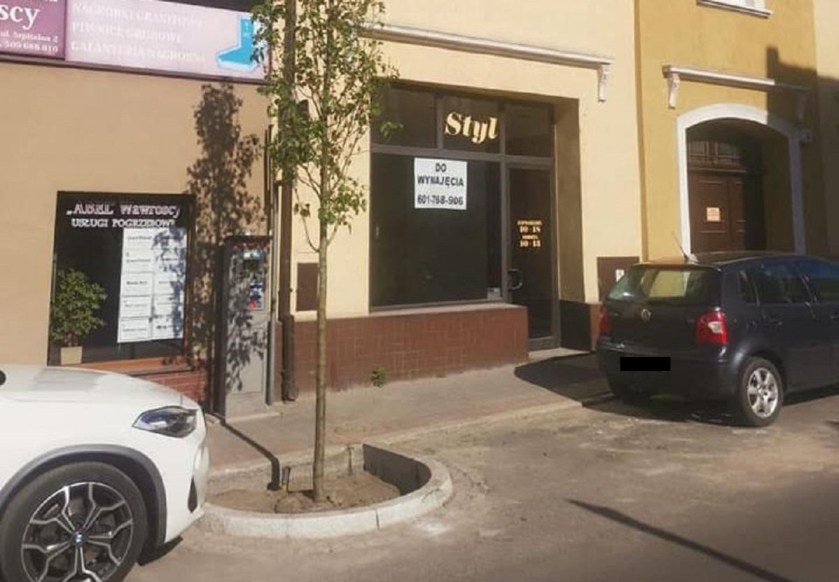 Pleszew. Ten temat wywoływał sporo kontrowersji. Na ulicy Sienkiewicza nasadzono już nowe drzewa - Zdjęcie główne