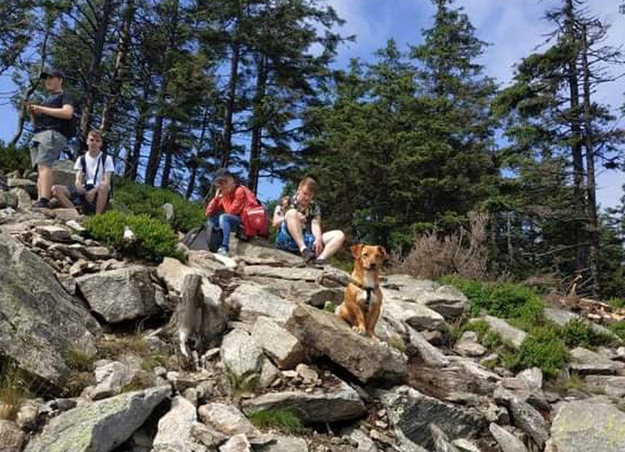 """Pleszew. Nasza młodzież uratowała w górach psa! """"Byli bardzo poruszeni losem zwierzaka"""" - Zdjęcie główne"""