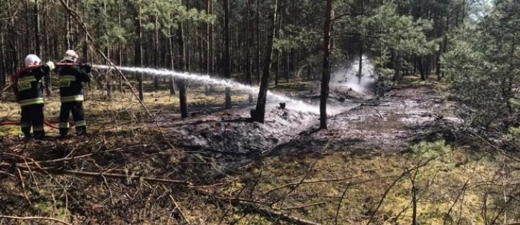 Dwa groźne pożary w lesie. Strażacy ostrzegają! [ZDJĘCIA] - Zdjęcie główne