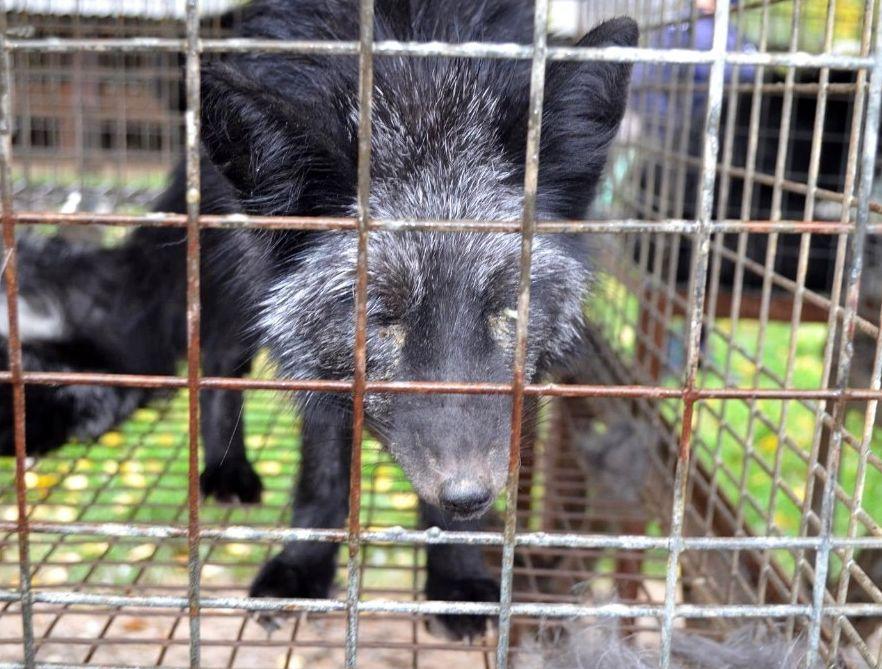 Drastyczne sceny na jednej z ferm. Zwierzęta umierały w męczarniach - Zdjęcie główne