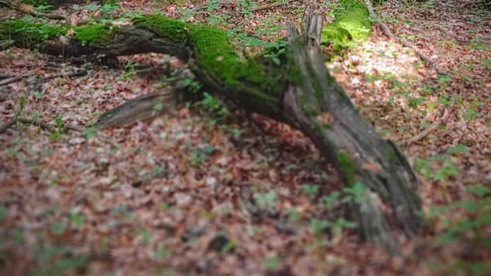 Poszli do lasu na grzyby, znaleźli ludzkie szczątki  - Zdjęcie główne