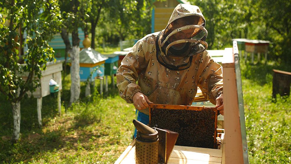 Wytruli pszczoły. Policja apeluje o pomoc w ustaleniu sprawcy. Wyznaczono nagrodę - Zdjęcie główne