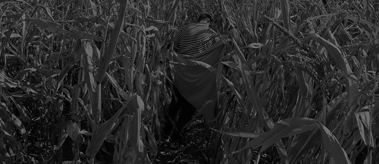 Mężczyzna twierdzi, że został zgwałcony w kukurydzy - Zdjęcie główne