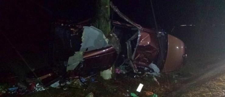 Bus wbił się w drzewo. Wielkopolanie trafili do szpitala  - Zdjęcie główne