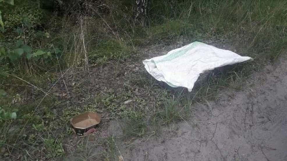 Wyrzucił psa w lesie w zawiązanym worku - Zdjęcie główne