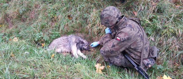 Podczas ćwiczeń uratowali potrąconego psa. Poszukiwany nowy dom - Zdjęcie główne
