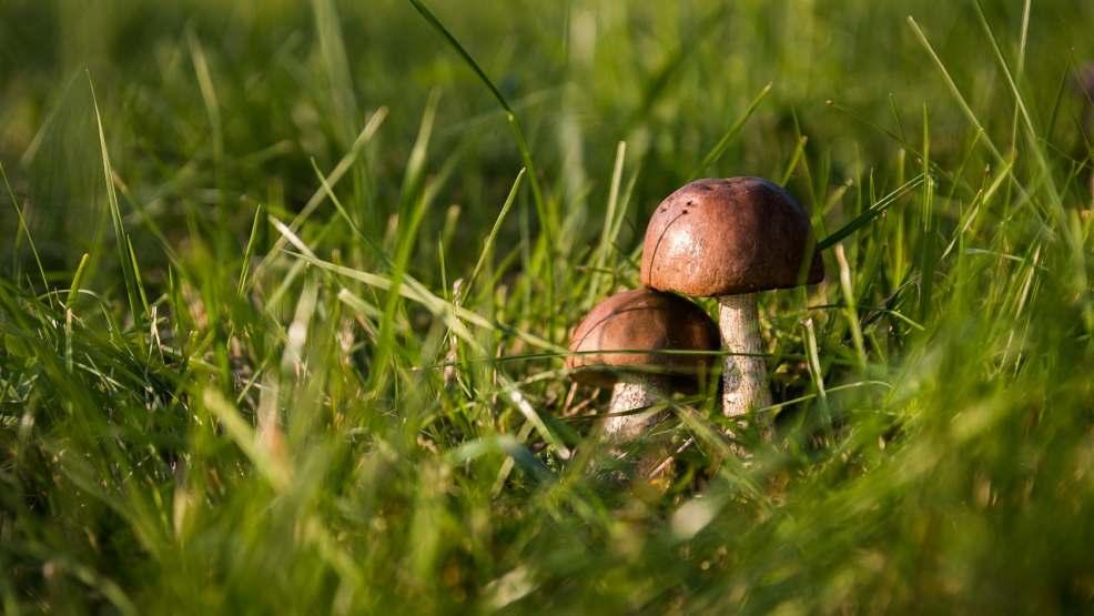 Pojawiły się już pierwsze grzyby! Poznaj podstawowe zasady grzybobrania - Zdjęcie główne