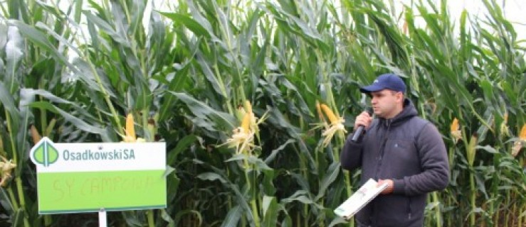 Sztandarowe odmiany kukurydzy na kiszonkę - Zdjęcie główne