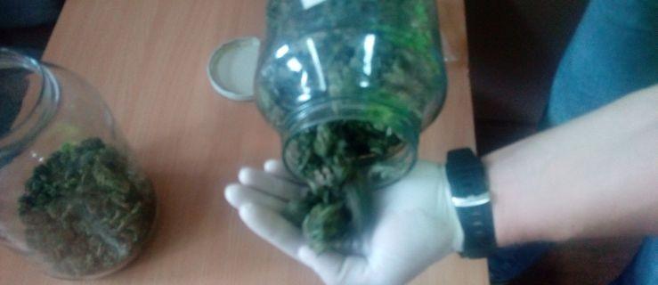 Hodował marihuanę na przydomowej plantacji, zabezpieczono ponad 325 gramów [WIDEO] - Zdjęcie główne