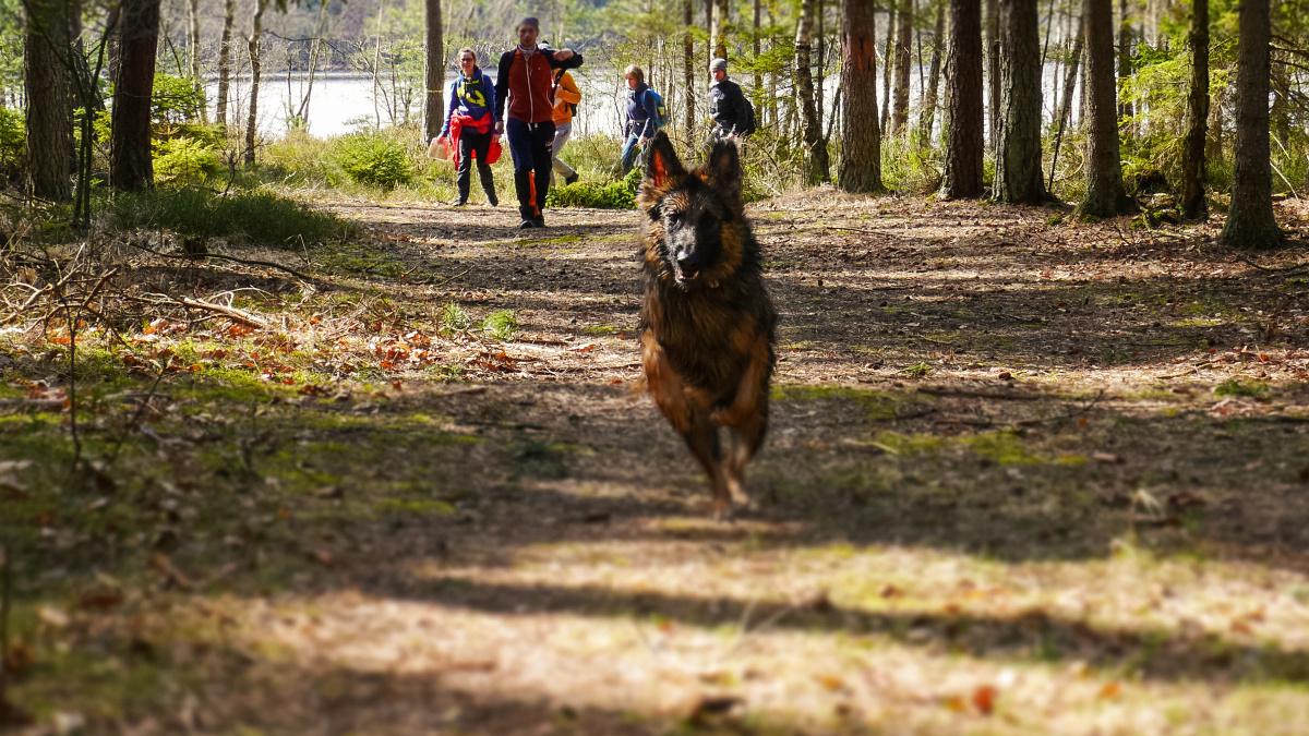 Od soboty spacer z psem bez smyczy może kosztować 500 zł - Zdjęcie główne
