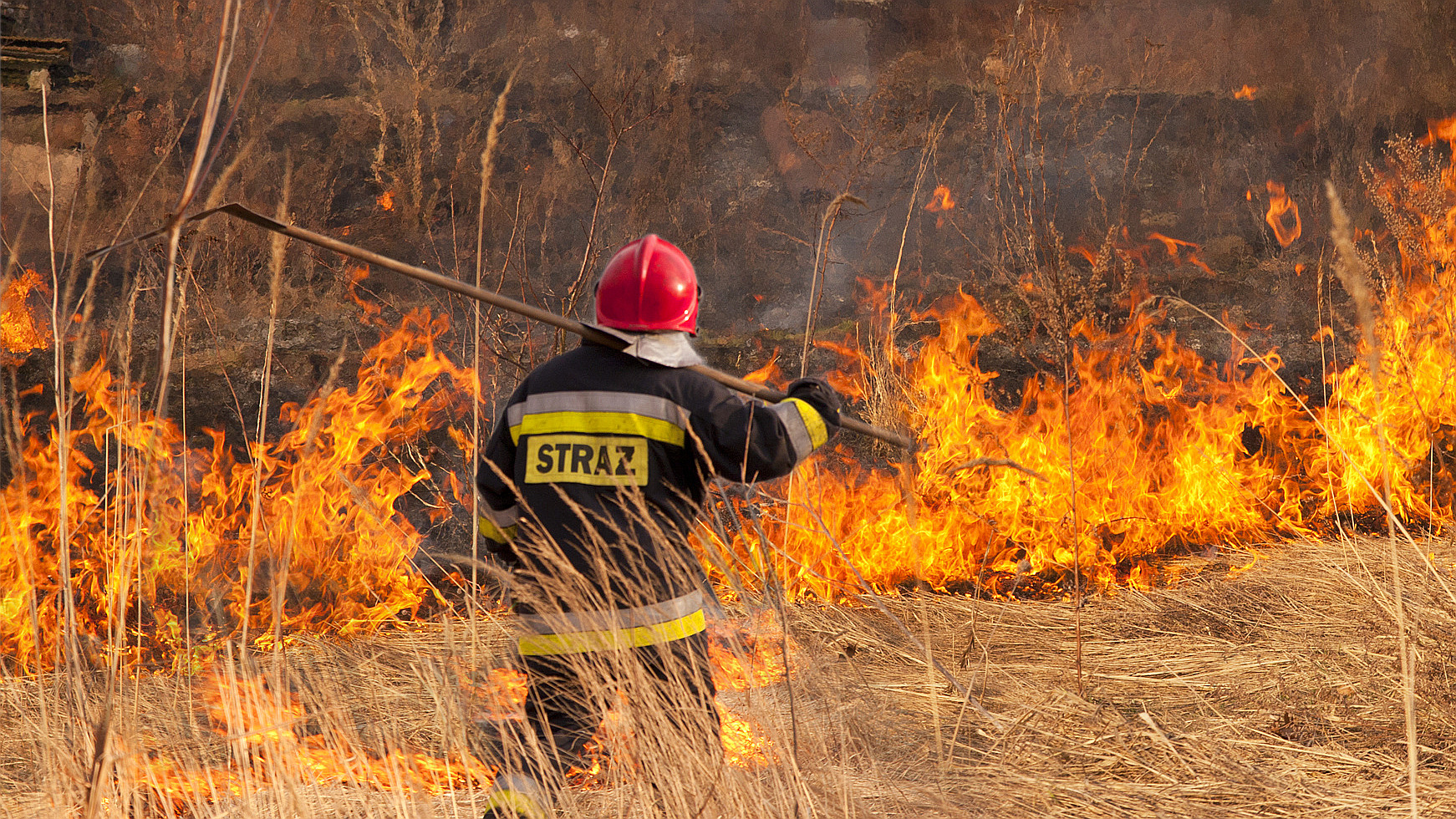 Pożary traw. Ogień rozprzestrzenia się bardzo gwałtownie. Żywioł niesie śmierć   - Zdjęcie główne