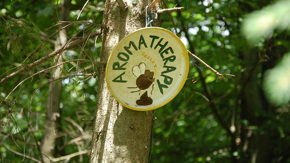 Jak z szacunkiem dla przyrody zrobić kupę w lesie? Lasy Państwowe doradzają - Zdjęcie główne